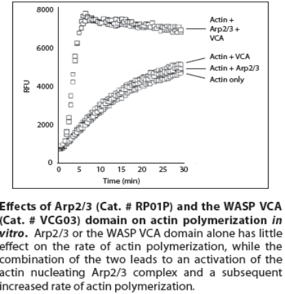 Actin聚合检测试剂盒.jpg